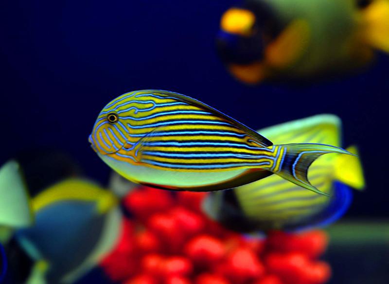 壁纸 动物 昆虫 鱼 鱼类 桌面 800_584